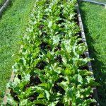 Как избавиться от травы между грядками?
