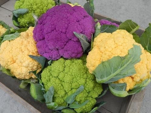 советы по выращиванию кориандра и цветной капусты на подоконнике