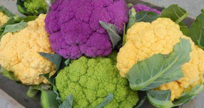 Простые советы по выращиванию кориандра и цветной капусты на подоконнике