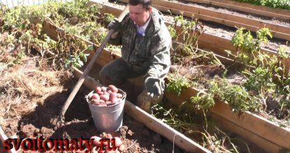 Урожай картофеля — Выводы и работа над ошибками